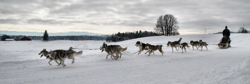 Dog sledding is one of the actiivities at the Schibsted Tech Polska Winter Event 2015